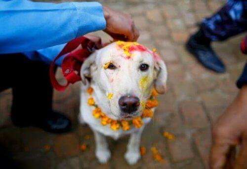 Découvrez dix festivités pour animaux de compagnie à travers le monde