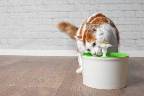 fontaine d'eau pour chat