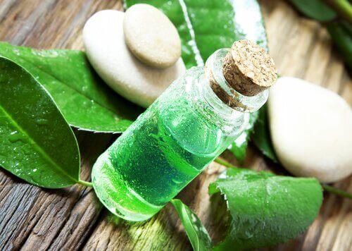 L'huile d'arbre à thé, une alliée contre les parasites