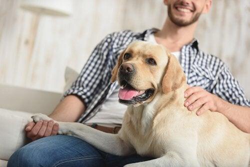 Saviez-vous que les chiens remarquent le ton de la voix ?