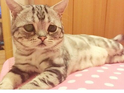 Nous vous présentons Luhu, le chat au visage triste