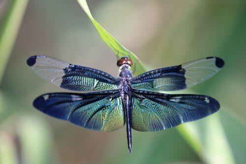 Découvrez la métamorphose de la libellule