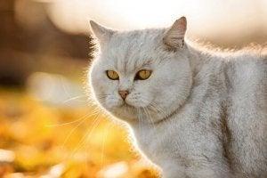 poils de chat brillants