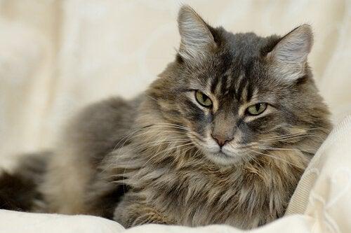 Tout savoir sur les poils de chat