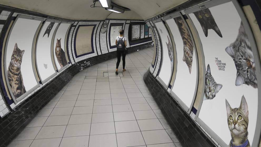 des photos de chats dans le métro de Londres