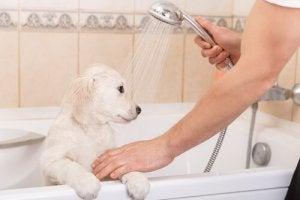 comment teindre les poils de votre animal en toute sécurité