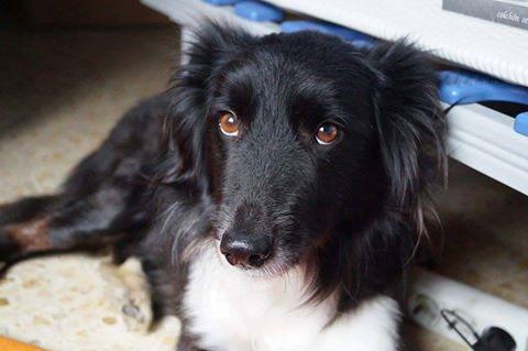 Thérapies élaborées pour les chiens rescapés