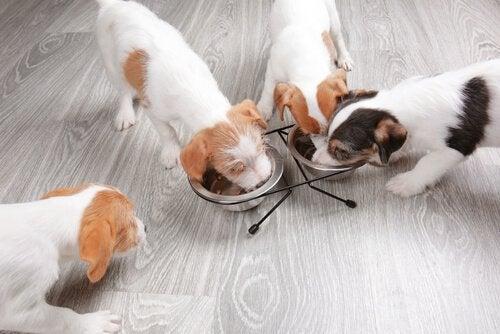 Croquettes ou pâtée pour chien : que choisir ?