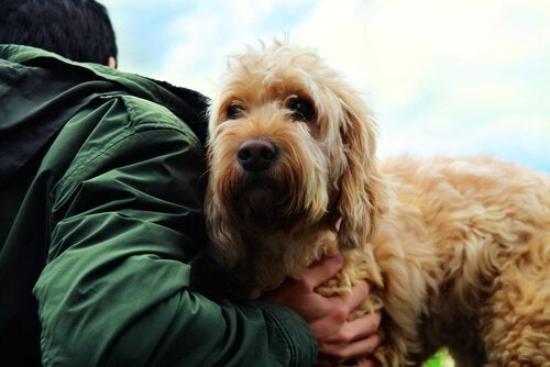 L'amitié entre les chiens et les Hommes