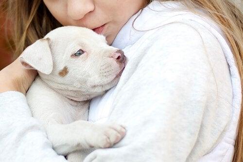 Trouble du spectre de l'autisme : les animaux comme thérapie