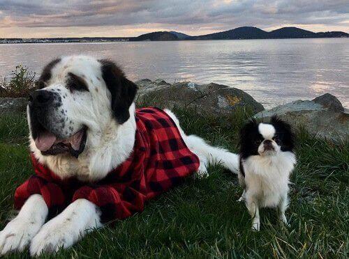 Blizzard et Lulu, deux drôles d'amis canins