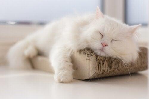 Comment combattre les infections urinaires chez les chats ?