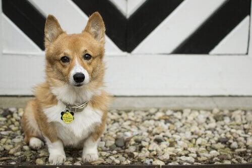 Est-il possible de changer le nom de mon chien ?