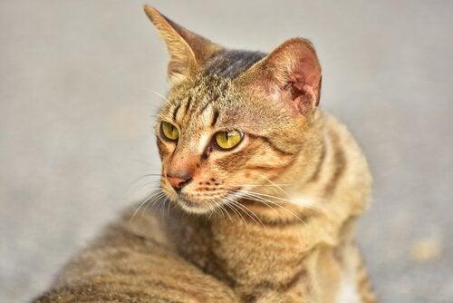 Un chat qui regarde derrière lui