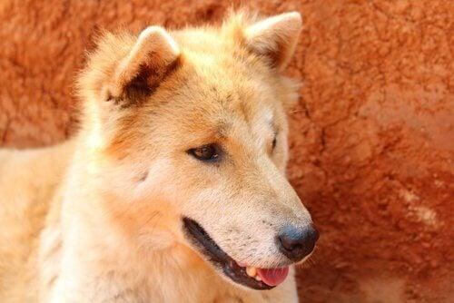 Problèmes d'estomac chez votre chien ? Aidez-le !
