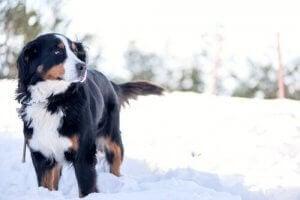 Un chien debout dans la neige