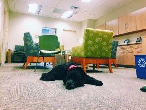 Un chien professeur à l'Université de Californie du Sud