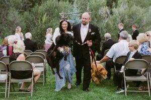 Un mariage entre chiens