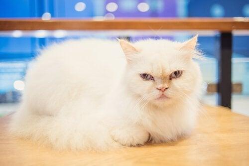 Est-il possible de dresser les chats ?