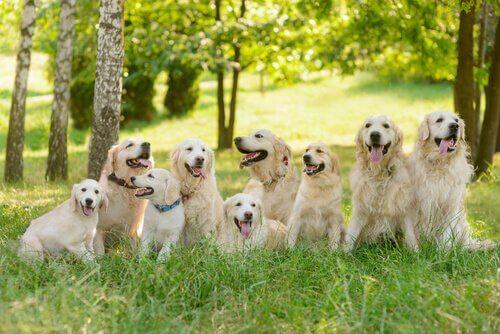 Les 6 derniers signes de l'horoscope canin
