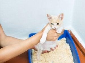 comment faire pour qu'un chat ne fasse pas ses besoins hors de la litière ?