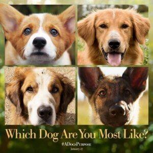 Cas de maltraitance animale sur le tournage de Mes vies de chien