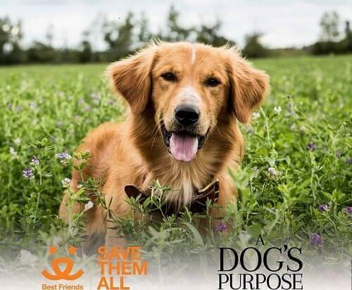 """Polémique autour du film """"Mes vies de chien"""" pour cause de maltraitance"""