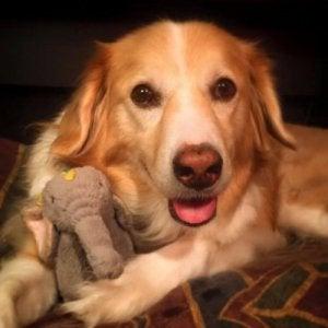 Une photo de Maple, la chienne musicienne