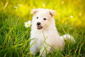 adoptez un chien si vous vivez seul