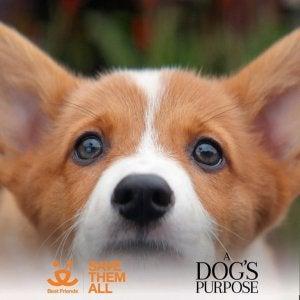 Une affiche de Mes vies de chien