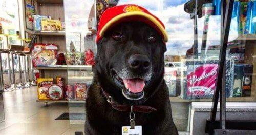 Negão, le meilleur chien pompiste du monde