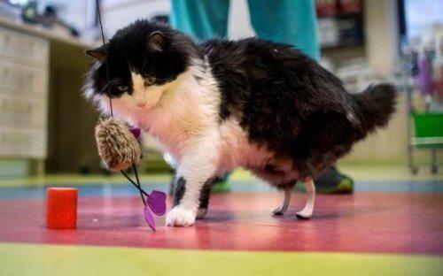 Prothèses bioniques implantées chez des chats handicapés