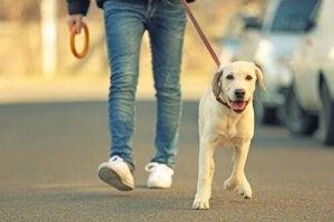 promener votre chien pour vous faire de nouveaux amis