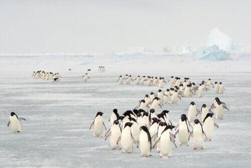 certains oiseaux migrateurs sont menacés d'extinction