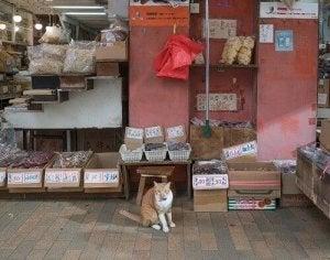 Hong-Kong, la ville amoureuse des chats