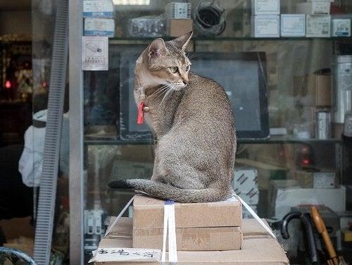 Hong Kong, la ville amoureuse des chats