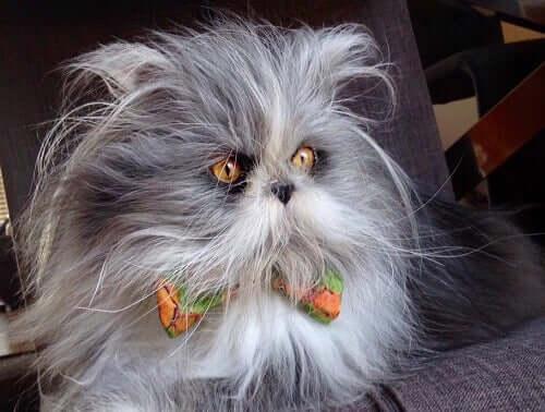 Atchoum : est-ce un chat ou un chien ? Saurez-vous reconnaître cet animal ?