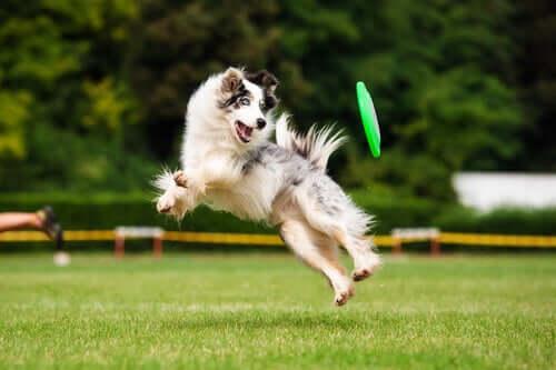 Les bienfaits de l'exercice pour votre chien