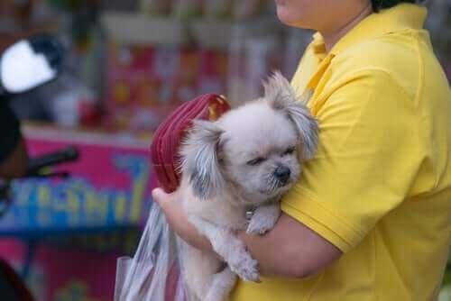 Opération contre la vente de chiens dans les animaleries