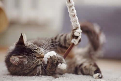 Preuves d'amour : quel cadeau pour votre animal ?