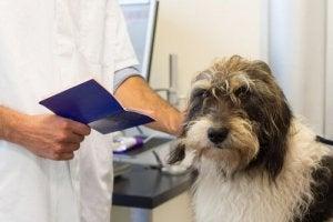 Un chien a besoin de certains documents pour voyager