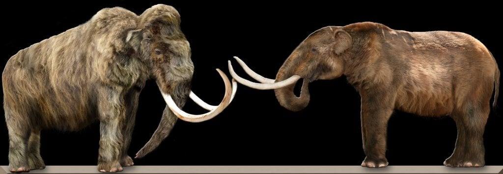 Le mammouth et le mastodonte sont deux espèces différentes