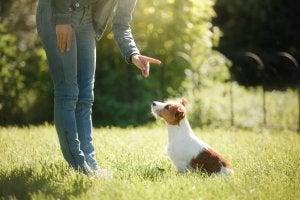 Une personne qui tente d'apprendre à un chien à s'asseoir