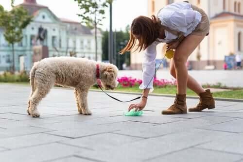 Le ramassage des excréments de chien sur la voie publique lors des promenades des chiens