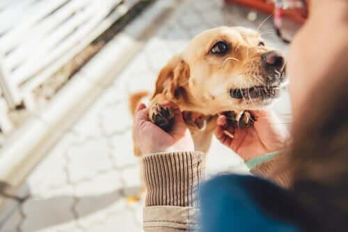 La reconnaissance des chiens envers leur proches
