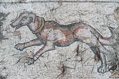 Races de chiens disparues à connaître