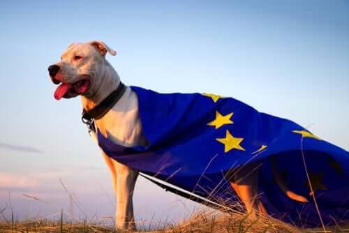 Qui sont les animaux de compagnie des politiciens européens ?