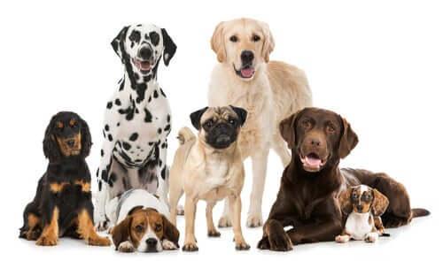 Les principales fédérations canines
