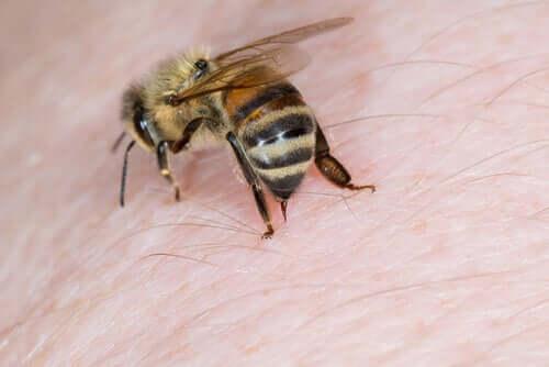 Les abeilles libèrent un venin utilisé dans certains médicaments