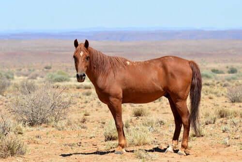 Le cheval en Afrique